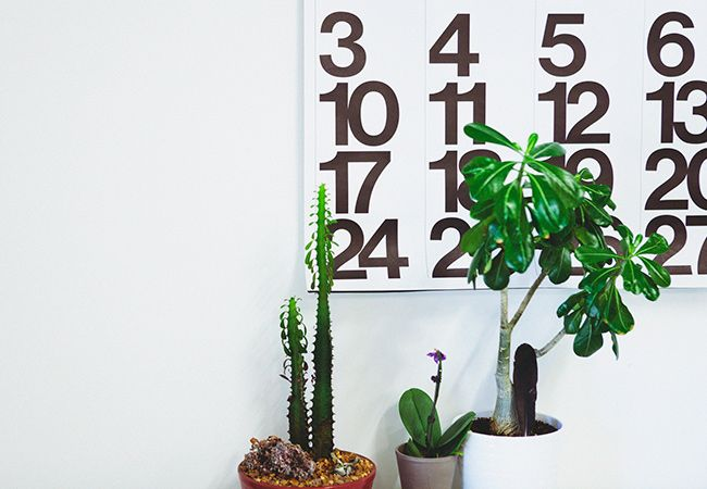 Stendig_Calendar_plants