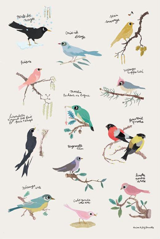 poster-oiseaux-tinou-le-joly-senoville_edited